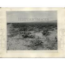 1925 Press Photo Sage Brush Desert