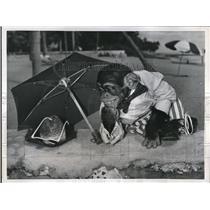 11956 Press Photo Miami Beach Fla A chimpanzee at a resort