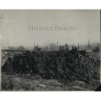 1921 Press Photo grapes harvested for jelly and oil