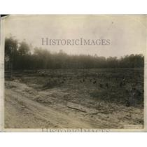 1920 Press Photo A forest area that has been logged out