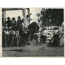 1931 Press Photo Salinas Calif Annual rodeo bull riding - nes21962