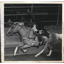 1944 Press Photo NYC Nancy Bragg stunt rider at Madison Square Garden