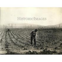 1923 Press Photo British Columbia, gardening