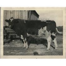 1927 Press Photo Prince Ormsby Bunardo Holstein bull champion