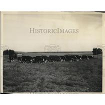 1937 Press Photo Belle Fourche federal reclamation project in South Dakota.