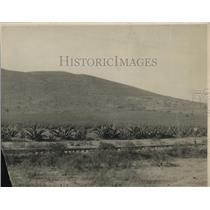 1924 Press Photo Magney Plants