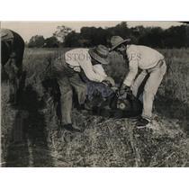 1923 Press Photo Catching of wild hog