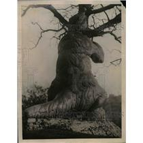1922 Press Photo The giant sloth is among the higher order of life