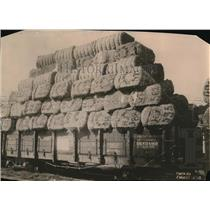 1920 Press Photo Cotton loaded for delivery