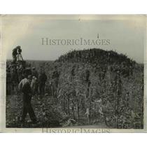 1930 Press Photo Corn Husking, a contest in Iowa