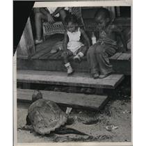 1939 Press Photo Sammy and James Johnson question the 40 pound turtle