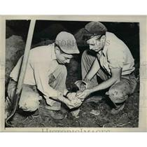 1945 Press Photo Two Men Find Buried Pot of Coins