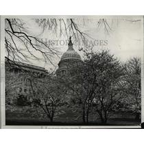 1933 Press Photo of the blossoms around the Capitol Building in Washington DC.