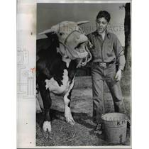 1952 Press Photo Pete Williams Washes Hereford Steer for Dutchess County Fair