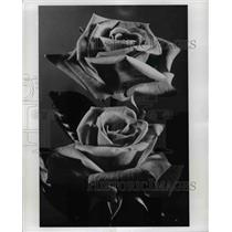 1974 Press Photo Flowers