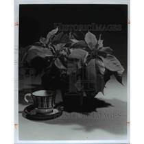 1977 Press Photo Flowers Poinsettia