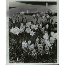 1977 Press Photo Flowers