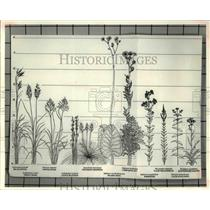 1980 Press Photo Different kinds of Flowers and Plants