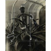 1927 Press Photo Lady Slipper, Cypridedium, species of the orchid