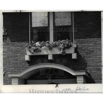 1977 Press Photo Flowers and Plants at the Window