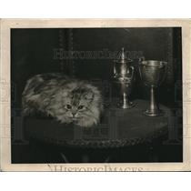 1920 Press Photo Silver Tabby Male, owned by Mrs. Syman B. Slukes