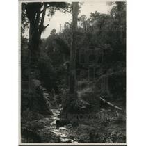 1926 Press Photo A NewZealand creek running thru some woods