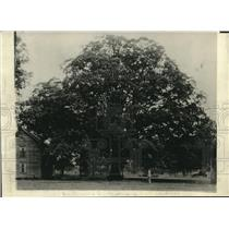 1922 Press Photo The Battleground Oak in Guilford N.C.