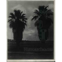 1926 Press Photo Palms In Irrigated Territory Near Phoenix, Arizona