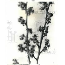 1988 Press Photo Garden center, forcing branches  - cva77373