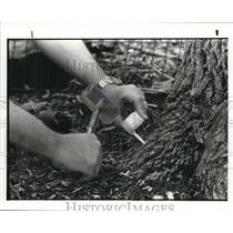 1983 Press Photo Treating tree by injection method - cva98911