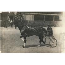 1918 Press Photo Czar Peter, famed pacer horse