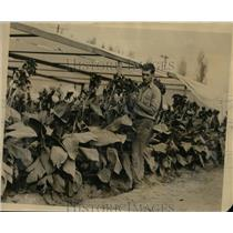 1925 Press Photo William H Henderson Assistant to Luther Burbank with Plant Expe