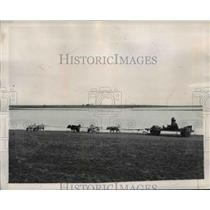 1947 Press Photo Eskimo on a dog sled on wheels at Point Barrow Alaska