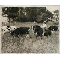 1929 Press Photo Joe Smeraldi on a pony rounding up cows on a farm - nex99837