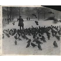 1926 Press Photo Edwin Stanley feeds birds and squirrels on the Boston Commons