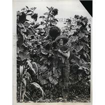 1933 Press Photo Virginia Dunham of Petaluma California in Field of Sunflowers