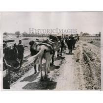 1935 Press Photo Ammunition pack train at Jugoslav border with Italy - nem31901