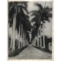 1928 Press Photo Magnificent Avenue Of Royal Palms - neb68760