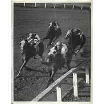 1939 Press Photo Whichee, Specify, Kayak II in Santa Anita Handicap in CA