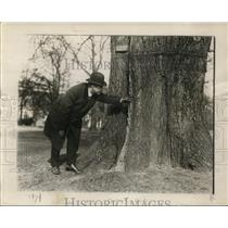 1920 Press Photo Tree surgeon, Martin L Davey, examines famous Washington Elm