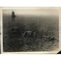 1919 Press Photo The Race Between Melshan Feline And Prince Pretty Face
