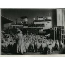 1941 Press Photo Sheep driven aboard a boat at Oran, destined for port in France
