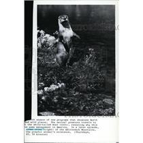 1986 Press Photo Animals River Otter - spp01329