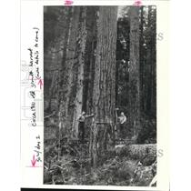 1989 Press Photo Logging - Oregon - orb28638