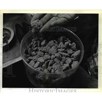 1980 Press Photo Chunks of hardened pumice displayed in Cougar Store - orb58769