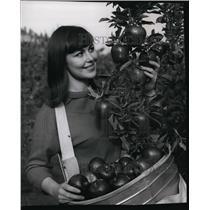 1980 Press Photo Apples - spa22489