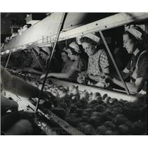 1937 Press Photo Women sorting and Canning Tomatoes - mjx02748