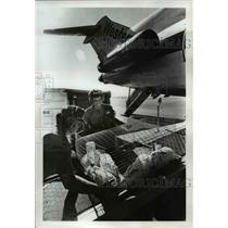 1976 Press Photo Charles Pemberton & Ray Anderson load rabbit trip to Costa Rica