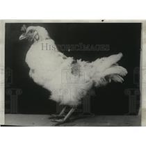 1929 Press Photo Birds Chicken - spa30683