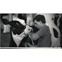 1984 Press Photo Scott Kruse held onto a yearling heifer at the Coliseum.